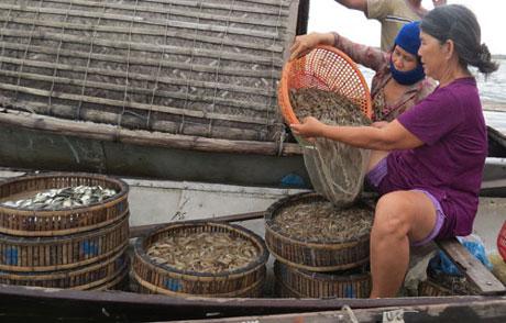 Độc đáo chợ quê: Chợ nổi trên phá Tam Giang